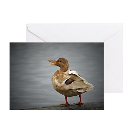 Singing Duck Greeting Cards (Pk of 20)