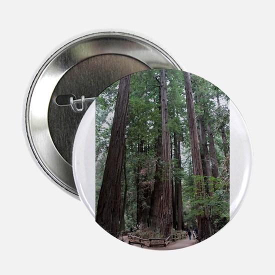 """Muir Woods, California 2.25"""" Button"""