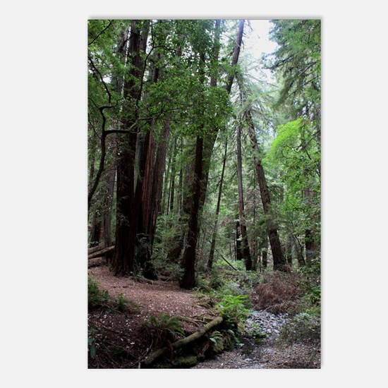 Muir Woods, California Postcards (Package of 8)