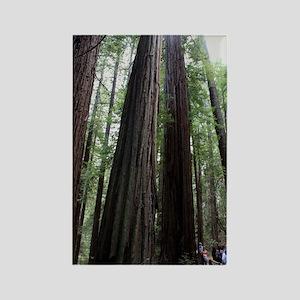 Muir Woods, California Rectangle Magnet