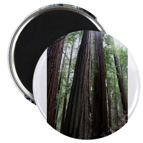 Muir Woods, California Magnet