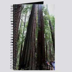 Muir Woods, California Journal