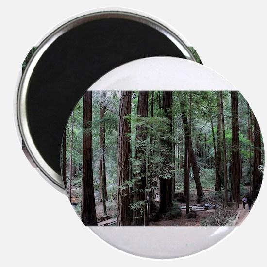 Muir Woods, California Magnet