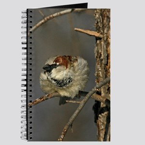 Male House Sparrow Journal