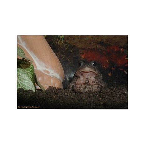 Onyx the Toad Rectangle Magnet