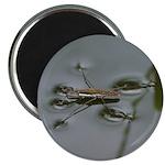 "Water Strider 2.25"" Magnet (10 pack)"