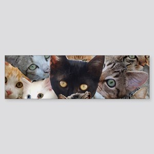 Kitty Collage Bumper Sticker