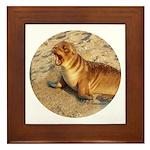Baby Sea Lion Framed Tile