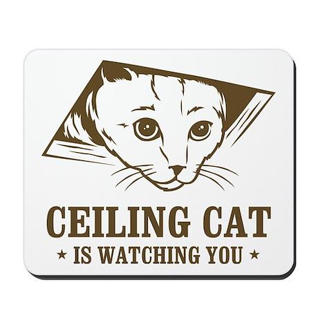 Cat ceiling masturbate watching