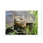 Galapagos Islands Turtle Postcards (Package of 8)