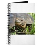 Galapagos Islands Turtle Journal
