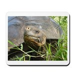 Galapagos Islands Turtle Mousepad