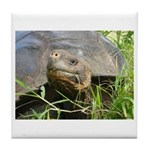 Galapagos Islands Turtle Tile Coaster