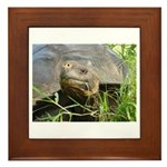 Galapagos Islands Turtle Framed Tile