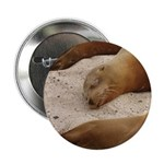Galapagos Islands Sea Lions Button