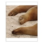 Galapagos Islands Sea Lions Small Poster