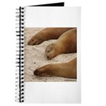 Galapagos Islands Sea Lions Journal