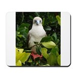 Galapagos Islands Red Footed Mousepad