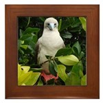 Galapagos Islands Red Footed Framed Tile