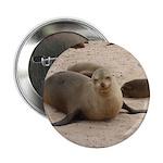 Galapagos Islands Sea Lion Button