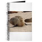 Galapagos Islands Sea Lion Journal