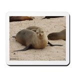 Galapagos Islands Sea Lion Mousepad