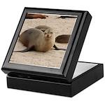 Galapagos Islands Sea Lion Keepsake Box