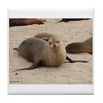 Galapagos Islands Sea Lion Tile Coaster
