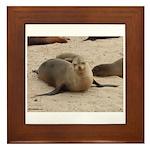 Galapagos Islands Sea Lion Framed Tile