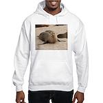 Galapagos Islands Sea Lion Hooded Sweatshirt