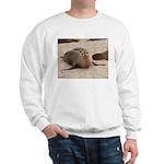 Galapagos Islands Sea Lion Sweatshirt