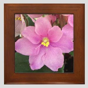 Beautiful Pink AV Framed Tile