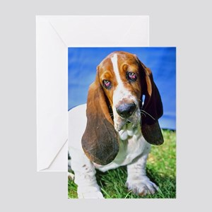 Basset Hound Photo Greeting Card