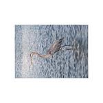 Blue Heron Water 5'x7'area Rug