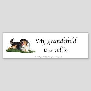My Grandchild is a Collie Bumper Sticker