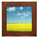 canola fields Framed Tile