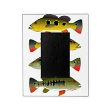 4 Peacock Bass Picture Frame