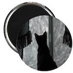 Kitten in Window Magnets