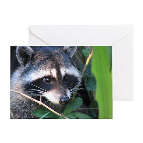 Raccoon Close up BLANK Card (1)