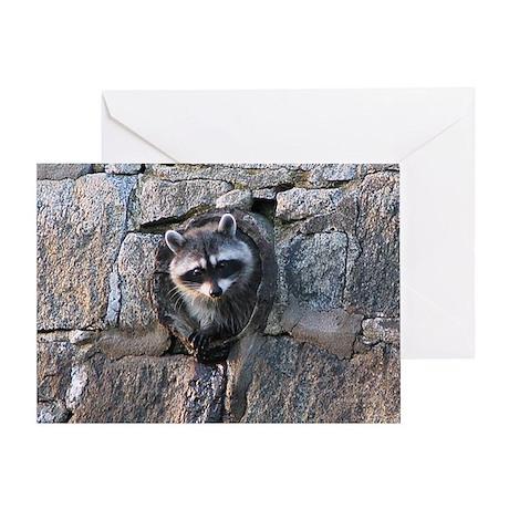 Raccoon in Culvert BIRTHDAY Card (1)