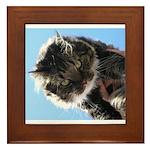 Kitty owns you Framed Tile