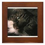 Figaro Closeup Framed Tile