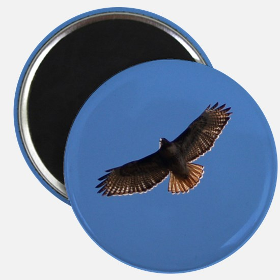 Red-Tailed Hawk Magnets