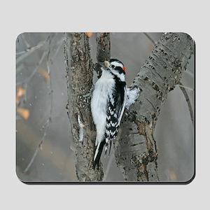 Male Downy Woodpecker Mousepad