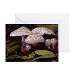 Fungi to Hang Out With Blank Greeting Card