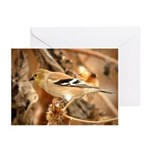 American Goldfinch Greeting Cards (Pk of 20)