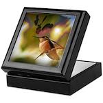 Rufous Hummingbird Birdwatching Keepsake Box