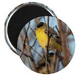"Lesser Goldfinch Bird Watch 2.25"" Magnet (10"