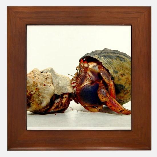 Curious Hermit Crabs Framed Tile