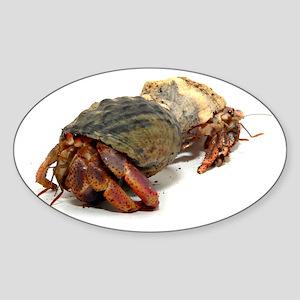 Wandering Hermit Crabs Oval Sticker